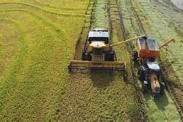 Brasil pode colher até 238 milhões de toneladas de grãos na safra 2018/19